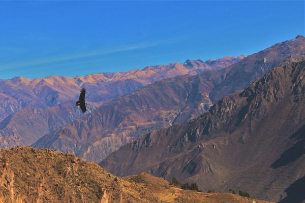 Colca Canyon - Peru Quechuas Lodge Ollantaytambo 600x400