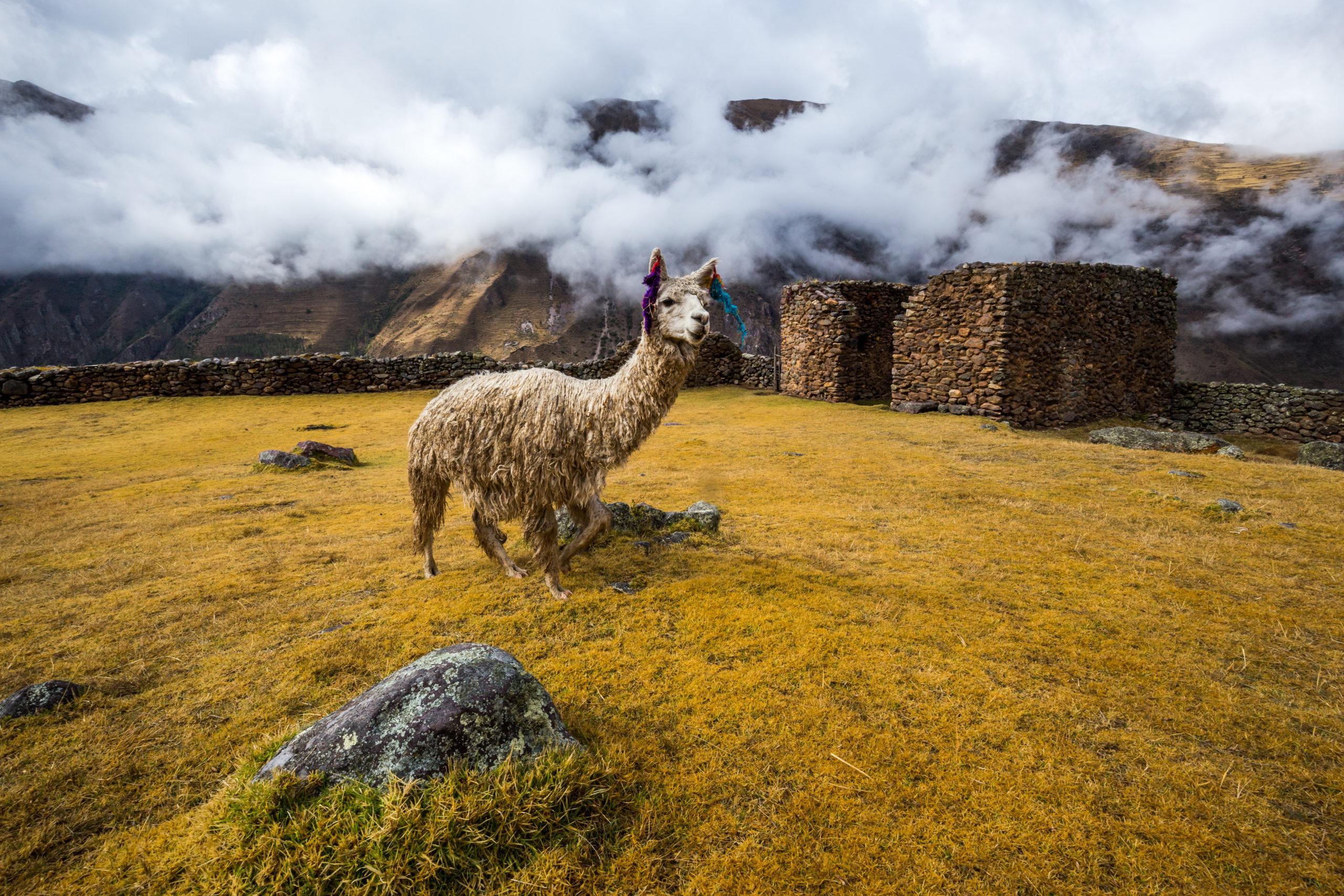 Pumamarka Inca Trail 02 - Peru Quechuas Lodge Ollantaytambo