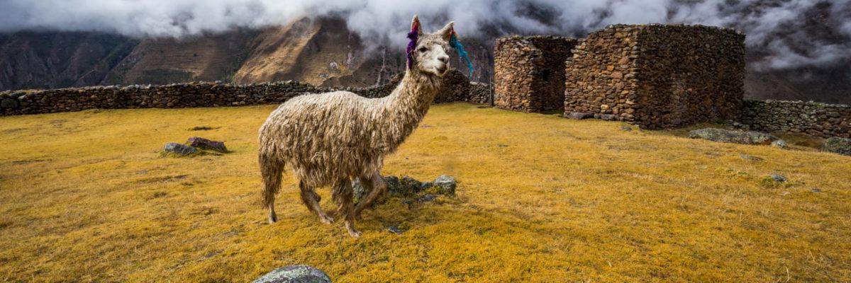 Pumamarka Inca Trail - Peru Quechuas Lodge Ollantaytambo